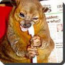 Oldest Kinkajou